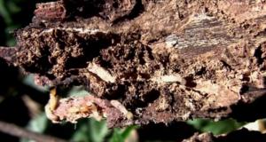 termite control - pest ontrol